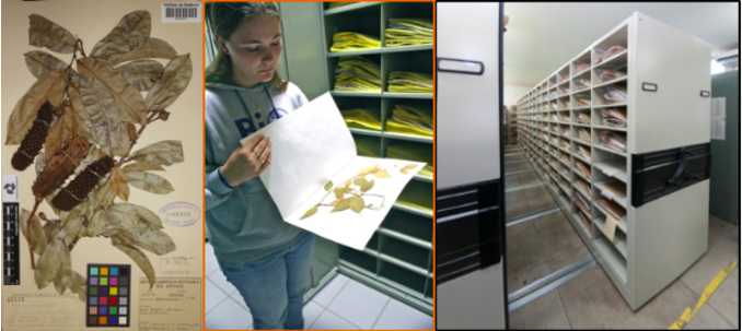 The Impact of Brazil's Virtual Herbarium in e-Science